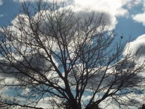 Tree in a Graveyard