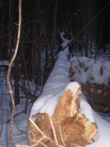 Tree Twilite