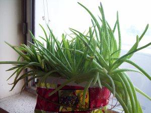 Mia's Plant One