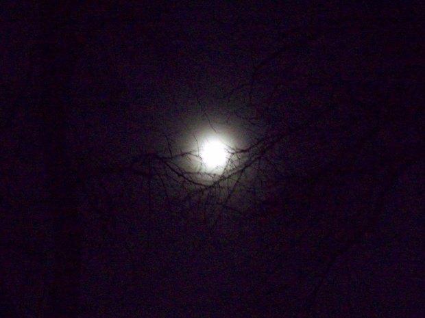 Nov 12 08 0366 Cradled Moon
