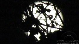Super April 5 6 2012 1